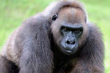 Harambe's Grandmother Put To Death At Age 49